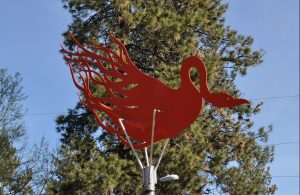 The Flaming Chicken's orange profile with a tall Ponderosa tree in the background.