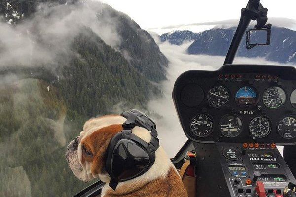 Scenic Aerial tours heli pup shot